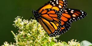 +20 curiosidades de los animales invertebrados