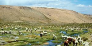 Serranía esteparia: flora y fauna