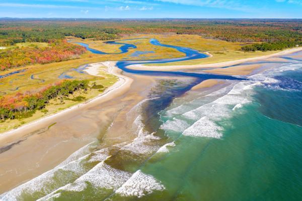 Estuarios: características, tipos, flora y fauna