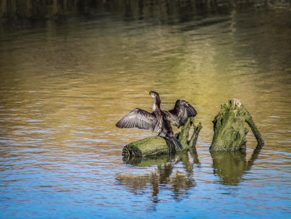 Estuarios: características, tipos, flora y fauna - Estuarios: fauna