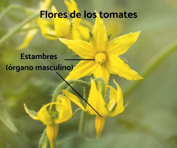 Plantas hermafroditas: qué son, características y ejemplos - Ejemplos de plantas hermafroditas