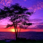 https://t1.ev.ltmcdn.com/es/posts/8/3/1/fotos-de-paisajes-naturales_138_gallery_93_150_square.jpg