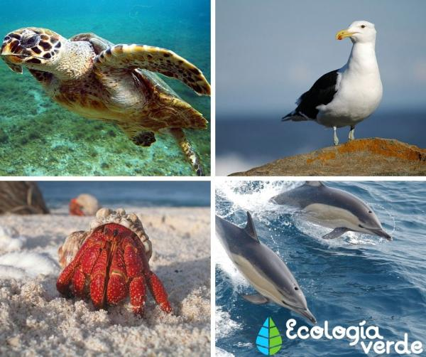 +60 animales de la costa
