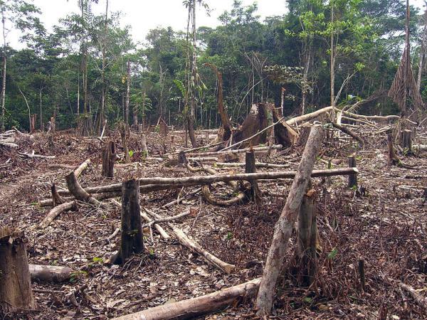 Consecuencias de la deforestación para niños