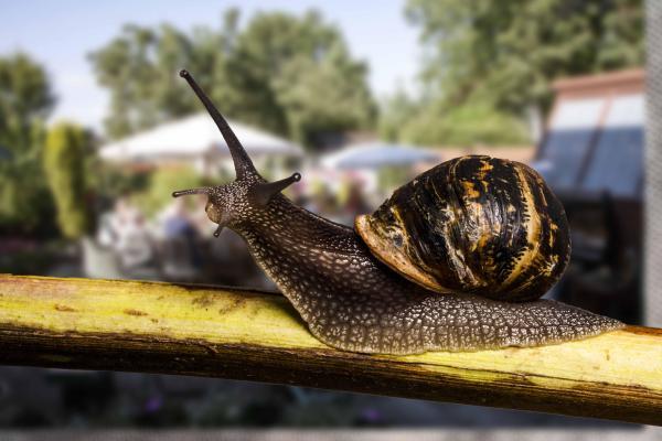 Algunas curiosidades del reino animal - El caracol que pasa un tercio de su vida durmiendo