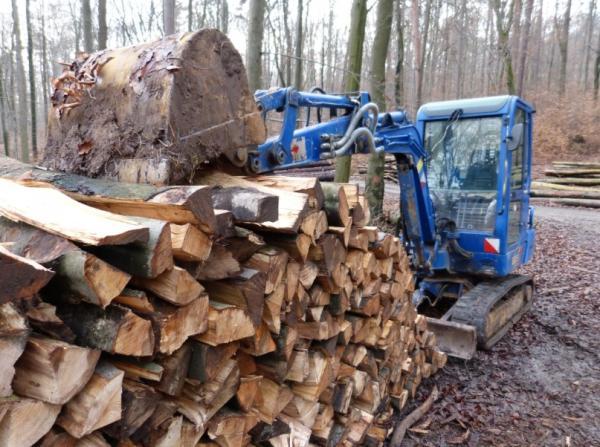 Consecuencias de la deforestación para niños - Pérdida de oxígeno, una de las consecuencias de la desforestación más graves