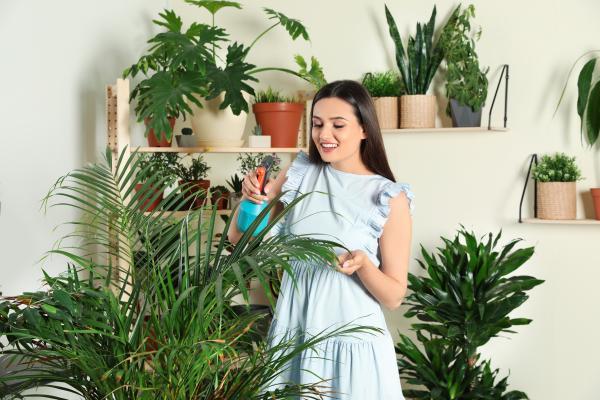 Cómo cuidar plantas de interior en verano