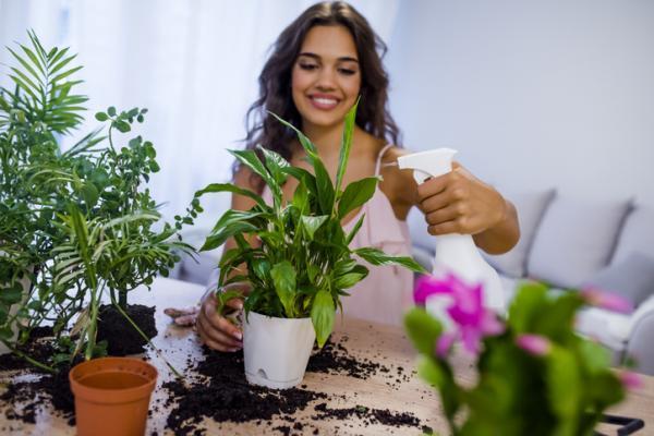 Cómo cuidar plantas de interior en verano - Nutrientes para las plantas de interior en verano