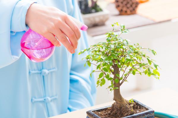 Cómo cuidar plantas de interior en verano - Riego de las plantas de interior en verano