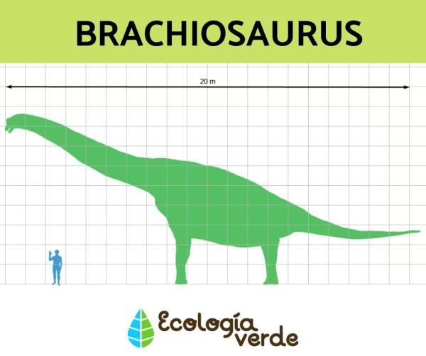 Dinosaurios herbívoros: nombres, tipos, características e imágenes - Brachiosaurus o braquiosurio