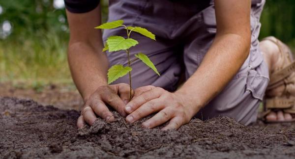 Soluciones para la contaminación del aire - Cuidar los bosques: una solución para la contaminación del aire