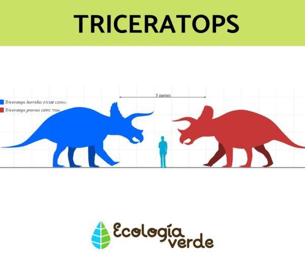 Dinosaurios herbívoros: nombres, tipos, características e imágenes - Triceratops