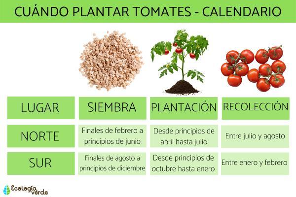Cuándo plantar tomates - Cuándo plantar tomates - hemisferio Sur