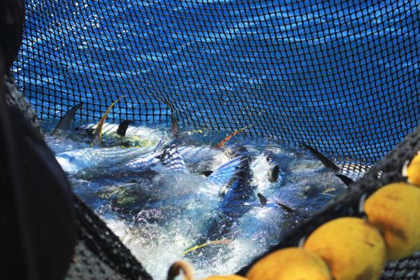 Sobrepesca: qué es, causas, consecuencias y soluciones - Qué es la sobrepesca