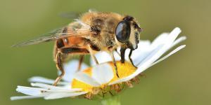 Función de las abejas