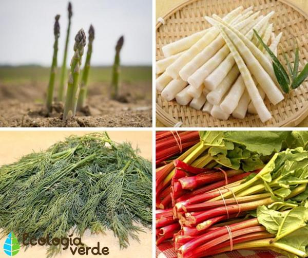 Tipos de tallos - Tipos de tallos comestibles - ejemplos