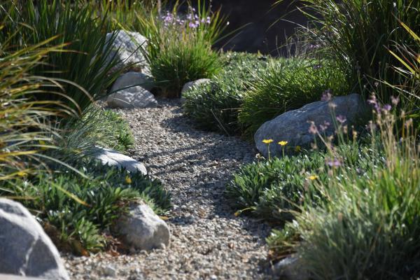 Plantas mediterráneas para jardín - Elementos naturales para un jardín sostenible