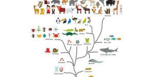 Origen y evolución de los animales: resumen