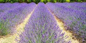 Plantas mediterráneas para jardín