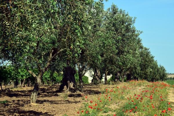 Plantas mediterráneas para jardín - Qué es la xerojardinería o jardinería sostenible