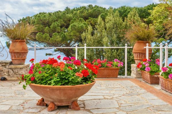 Plantas de exterior en maceta - El geranio