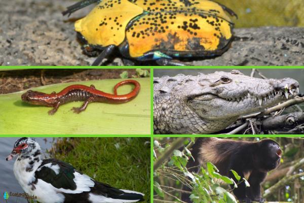 Flora y fauna de Veracruz - Animales en peligro de extinción en Veracruz