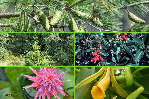 Flora y fauna de Veracruz - Flora de Veracruz