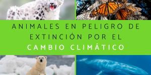 Animales en peligro de extinción por el cambio climático