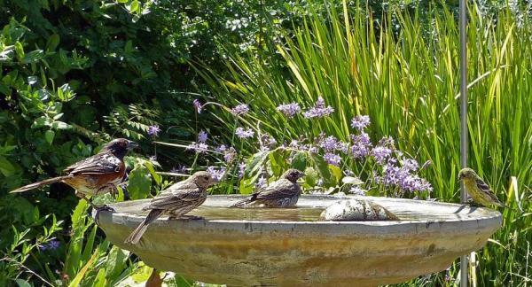 Convierte un jardín en un paraíso de biodiversidad
