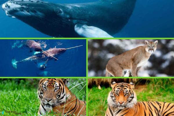 Animales en peligro de extinción por el cambio climático - Otros animales en peligro de extinción por el cambio climático