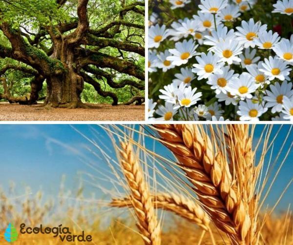 Frondosas: qué son, características y ejemplos - Frondosas: ejemplos de plantas y árboles