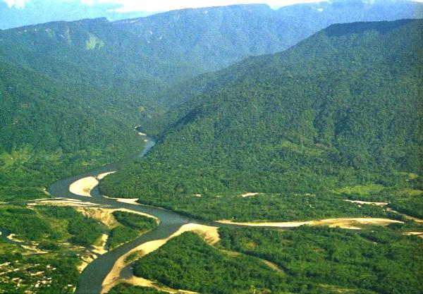 Selva alta: características, flora y fauna