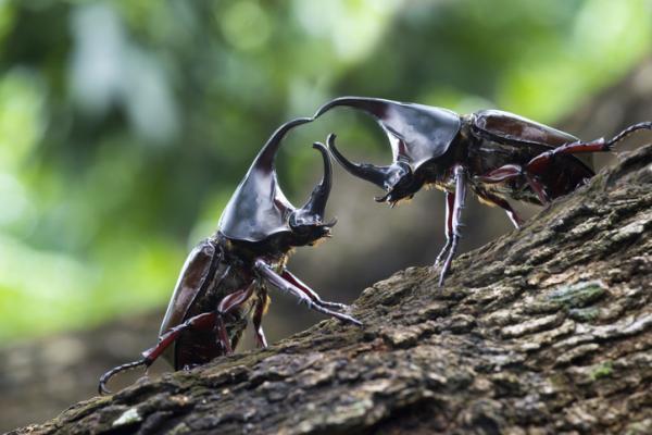 Coleópteros: qué son, características, tipos y ejemplos - Características de los coleópteros