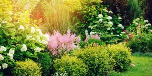 Qué son los arbustos