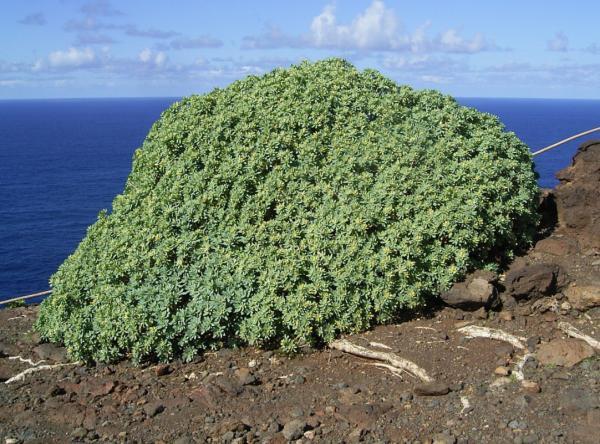 Qué son los arbustos - Qué son los arbustos y sus características