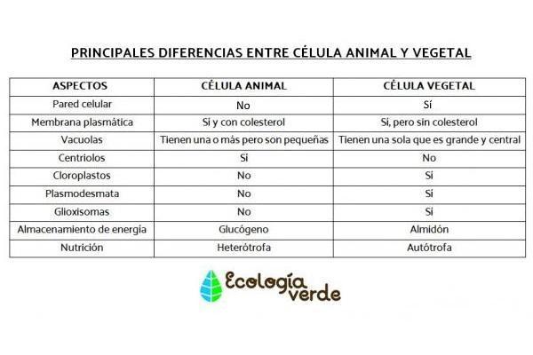 Partes de la célula vegetal - Diferencia entre célula vegetal y animal