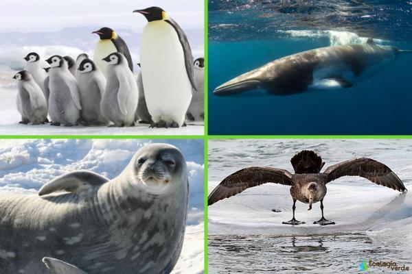 Flora y fauna de la Antártida - Fauna de la Antártida