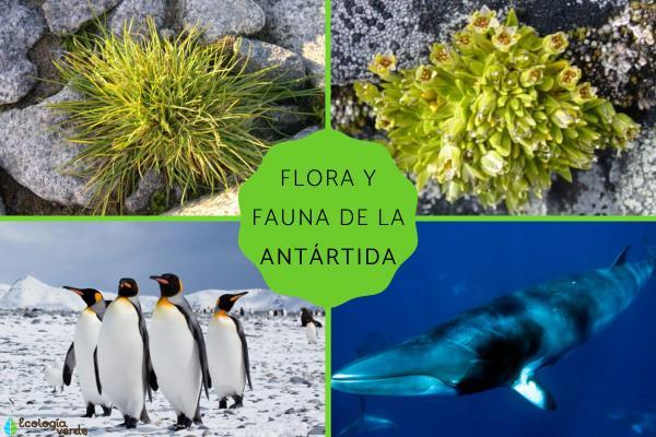 Flora y fauna de la Antártida