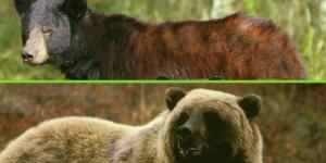 ¿Hay osos en México?