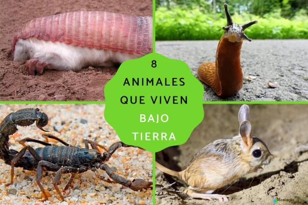 Animales que viven bajo tierra