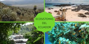 Cuáles son los ecosistemas del Ecuador