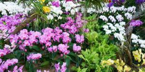 12 tipos de orquídeas