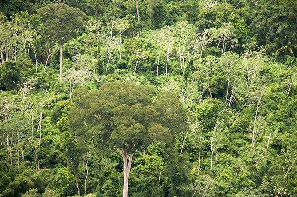 Tipos de biomas terrestres - Bosques