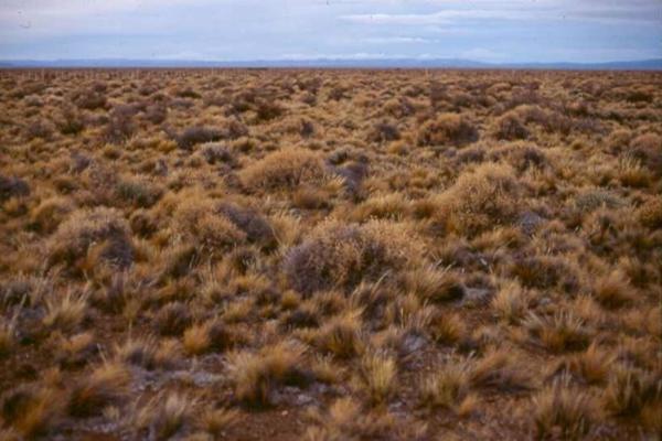 Tipos de biomas terrestres - Estepas