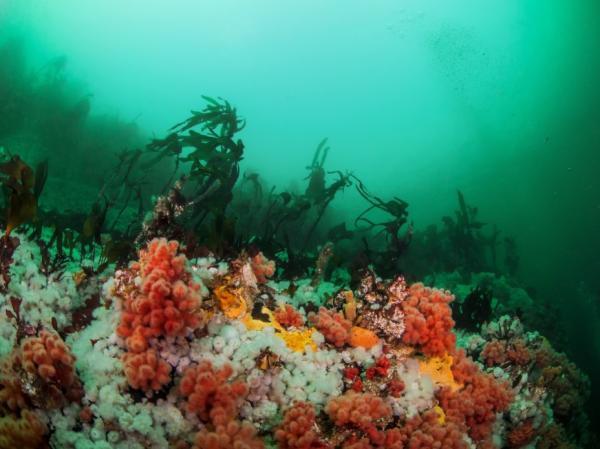Ecosistema marino: qué es, características, flora y fauna - Flora de los ecosistemas marinos