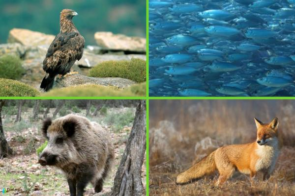 Flora y fauna de Alemania - Fauna de Alemania
