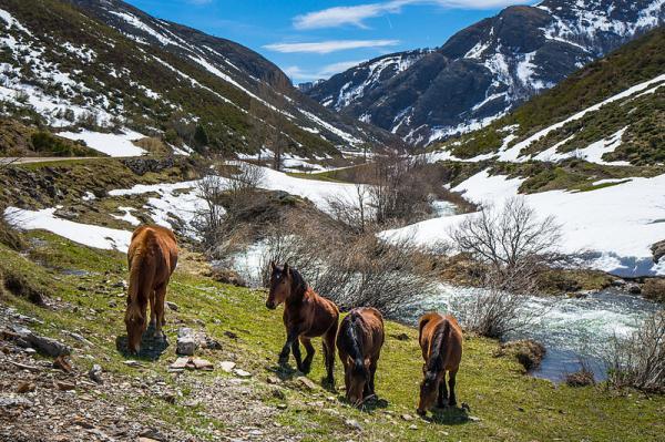 Principales Parques Naturales de España - Parque Natural y Nacional de los Picos de Europa, en el norte de España