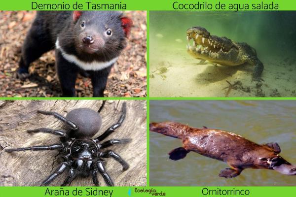 Flora y fauna de Australia - Fauna de Australia