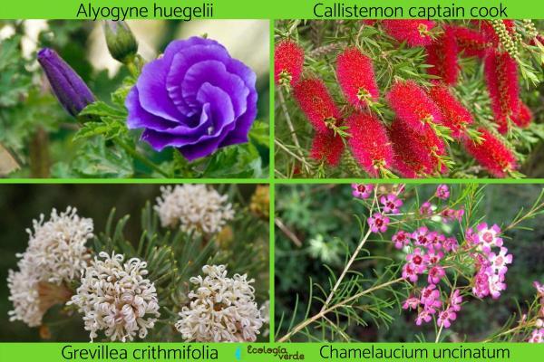 Flora y fauna de Australia - Flora de Australia