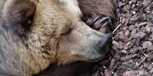 Qué animales hibernan y por qué